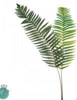 BOSTON FERN STEM - 2 pack